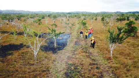 Incendios en Quintana Roo