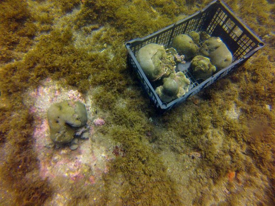 Pasto marino y corales