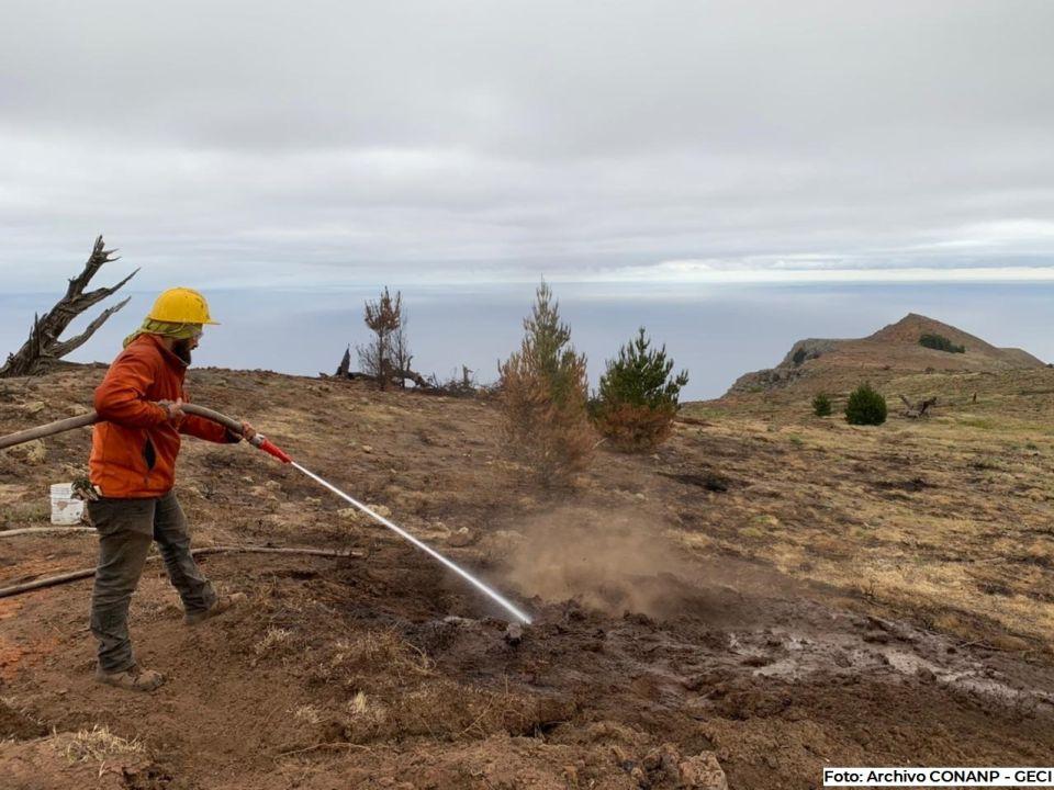 Incendio en Reserva de la Biósfera Isla Guadalupe