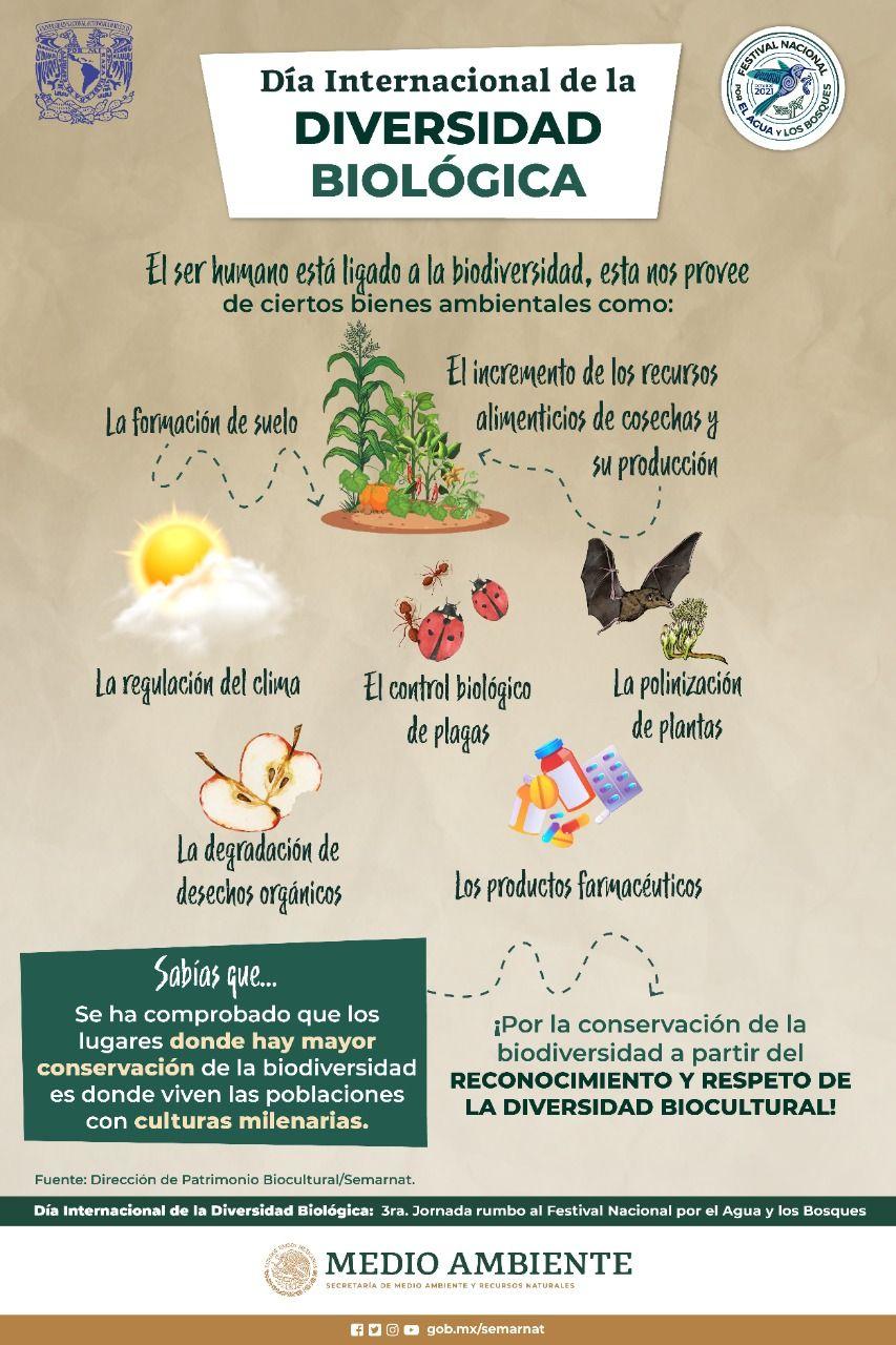 Infografía Biodiversidad